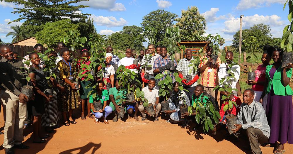coffee plantation yambino eduardo